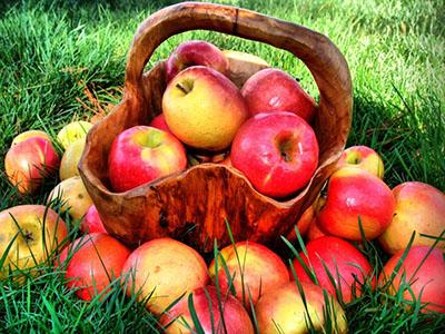 Zaštita jabuke
