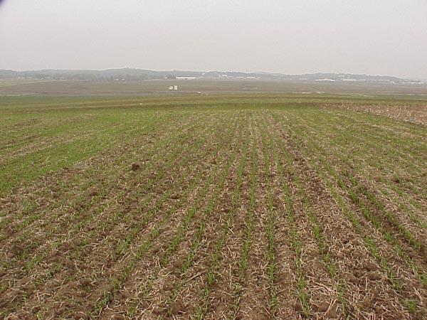 Novembar pregled polja