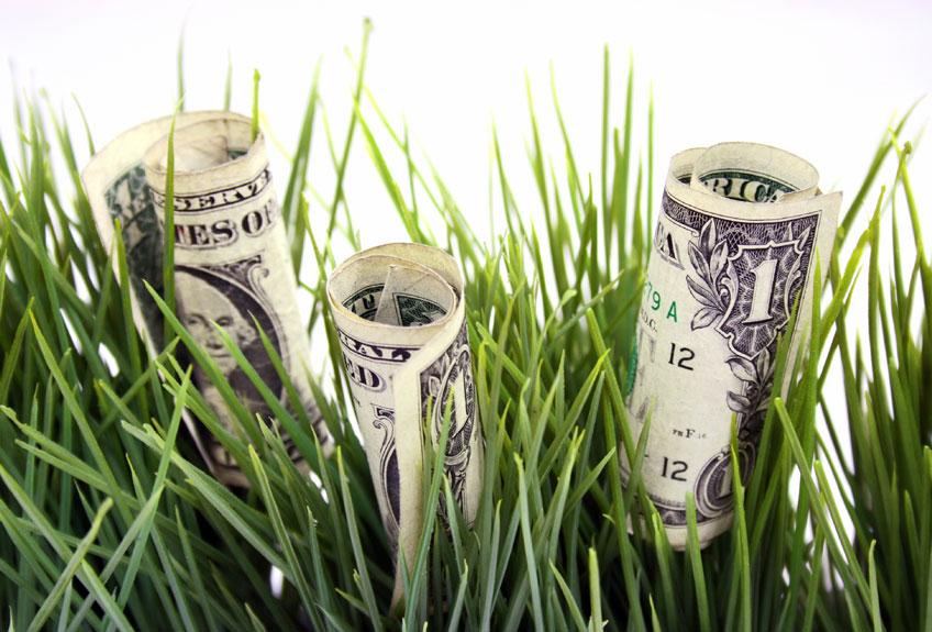 Money-grass